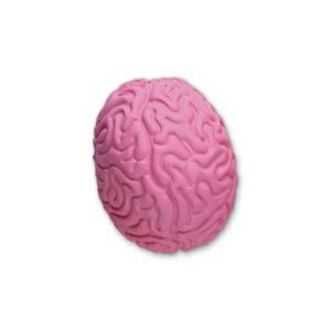 Brain Stock Shape Pencil Top Eraser